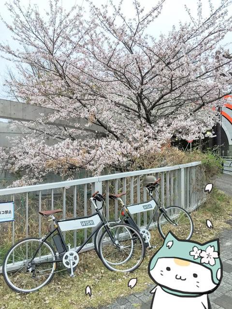 チャリにゃんと桜