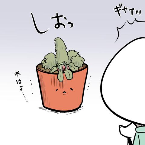 ohana_syogatsu