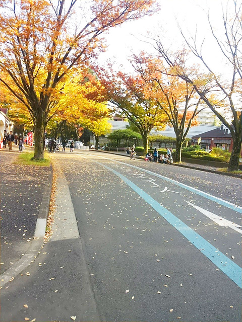 komazawa_photo02