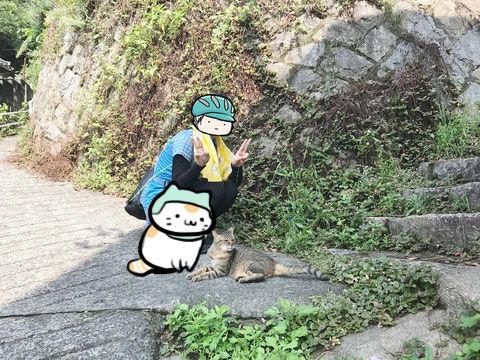 20161112_neko_kikka