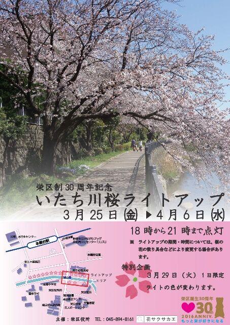 Itachigawasakurarightup