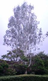 d12949b6.jpg