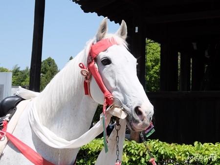 東福寺4馬