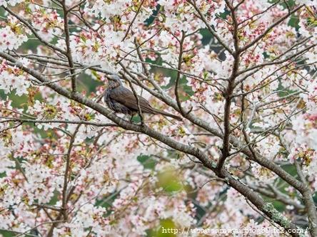 長谷寺の鳥