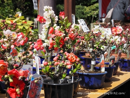 城南宮の盆栽