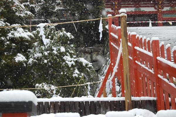 雪のヒコバエ