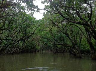奄美大島のマングローブ林のカヌー