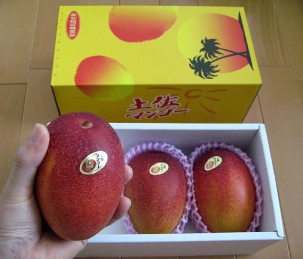 四国・南国・高知県産「アップル土佐完熟マンゴー」アーウィン種