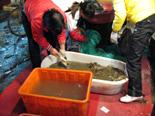 上海の銅川路水産市場で上海蟹を買う!