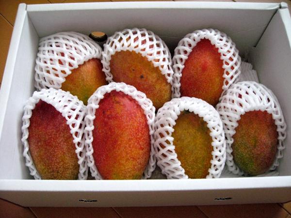 沖縄・石垣島の完熟マンゴーを食す!