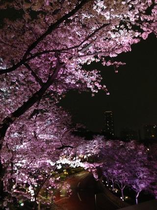 アフタヌーンティー @ザ・リッツ・カールトン東京の桜祭り