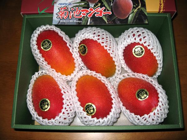 くまもとの高級完熟「きくちマンゴー」を食す!