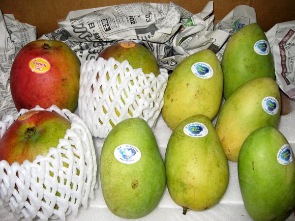 メキシコ産 「アップルマンゴー」を食す!