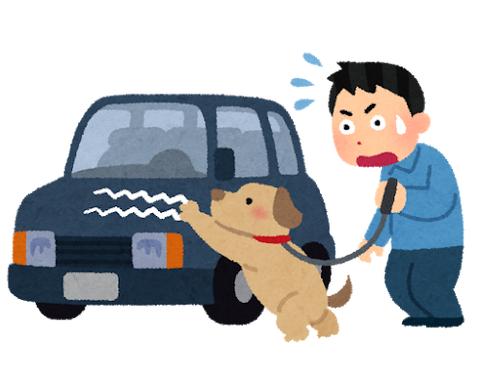 pet_inu_car_kizu[1] a