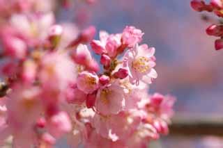 yun_5414桜