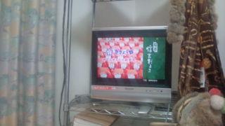 信玄だるま テレビ