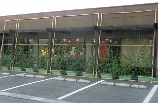 5グリーンカーテン