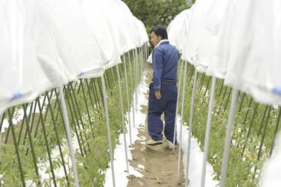 笛吹ファームのきゅうり栽培中