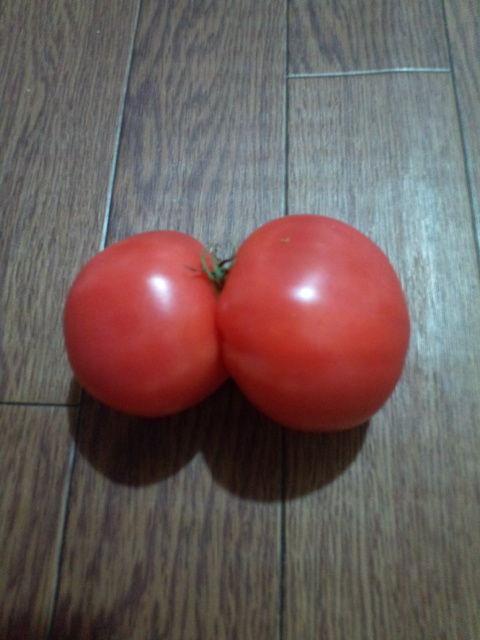 双子のトマトその1
