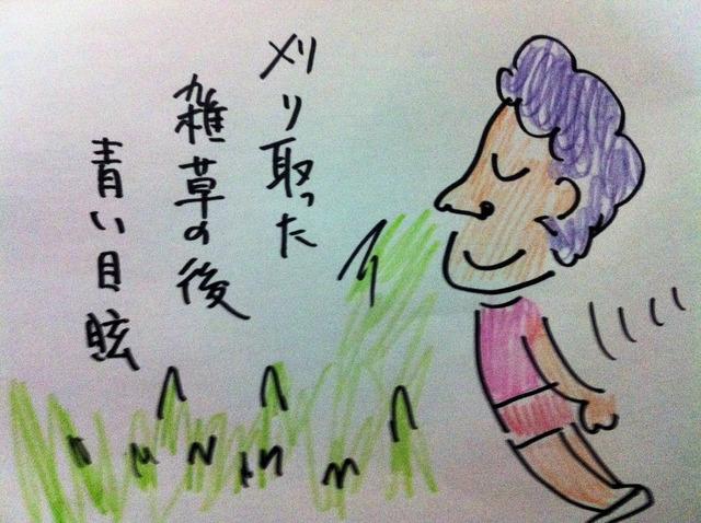 刈り取った 雑草の後 青い目眩 (2)