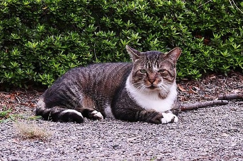 猫③180913 (66)