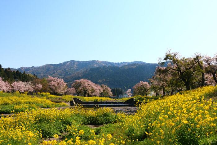 滋賀・長浜市・黒田大橋20160412-8