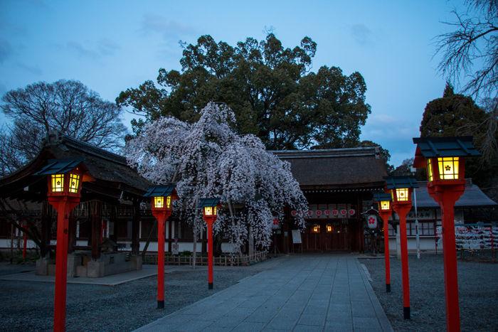 京都・北区・平野神社20170404-2