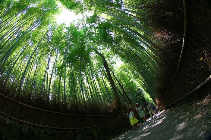 京都・右京区・【魚眼風景】嵐山竹林の道20150527-8