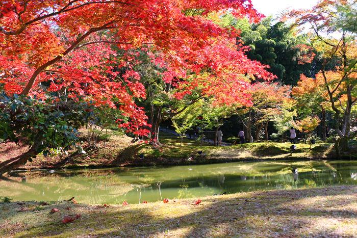京都・東山区・高台寺20151116-7