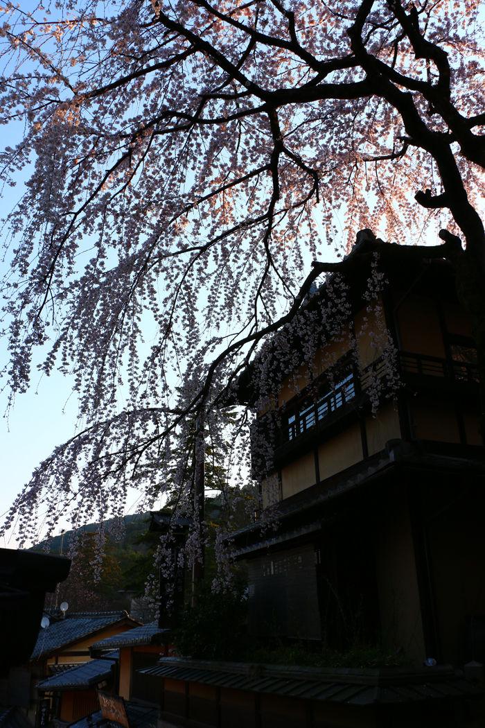 京都・東山区・産寧坂(三年坂)20160329-9