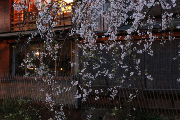 京都・東山区・祇園白川20160402-6