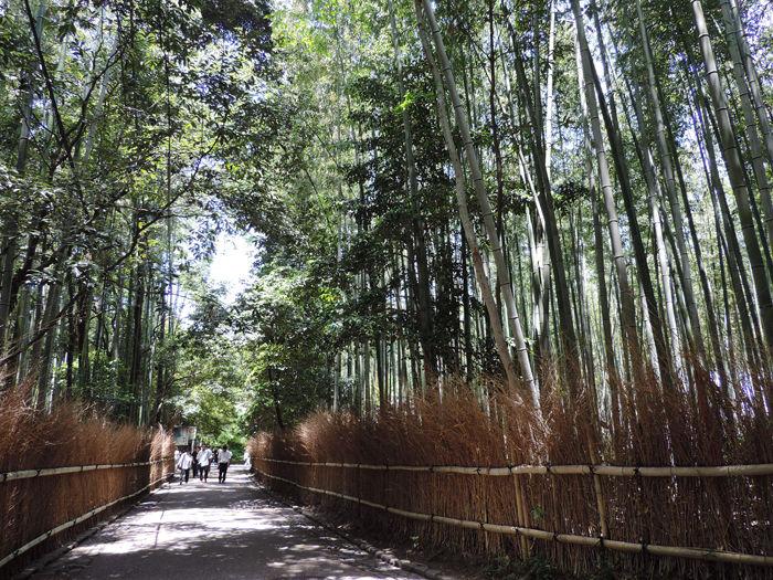 京都嵐山竹林の道1