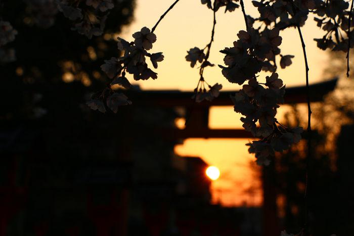 京都・北区・平野神社20160330-2