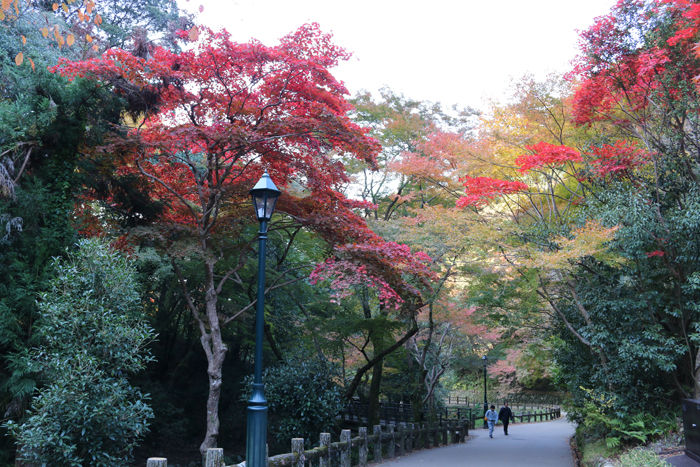 大阪・箕面市・箕面の滝20131120-1-6