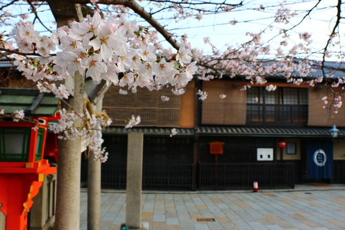 京都・東山区・祇園白川20150331-6