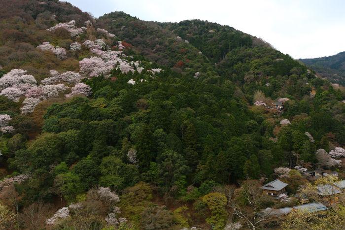 京都・右京区・嵐山公園亀山地区20160402-3
