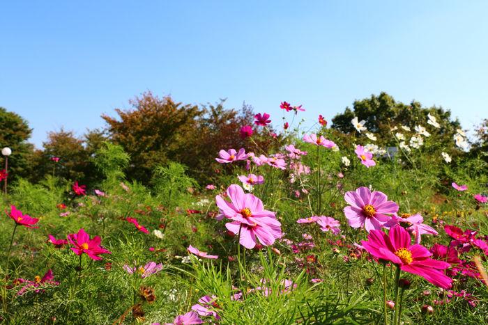 大阪・鶴見区・花博記念公園鶴見緑地20141024-6
