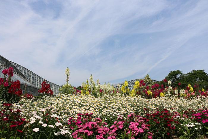京都・左京区・京都府立植物園20160606-1