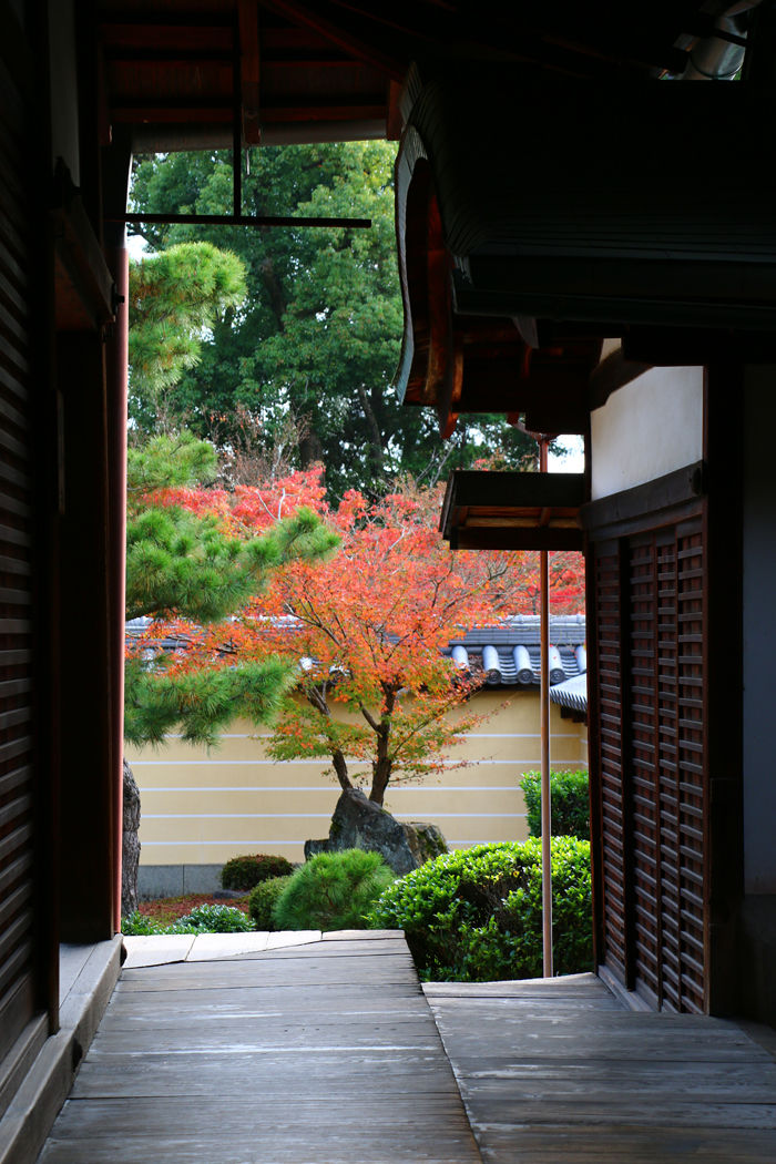 京都・北区・等持院20151121-3