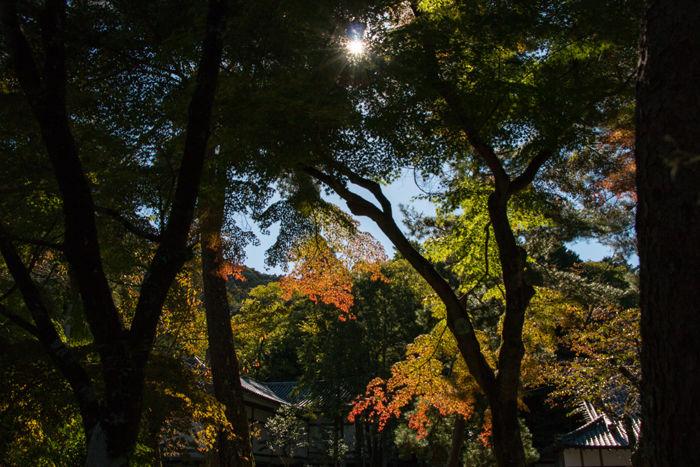 京都・左京区・南禅寺20161102-4