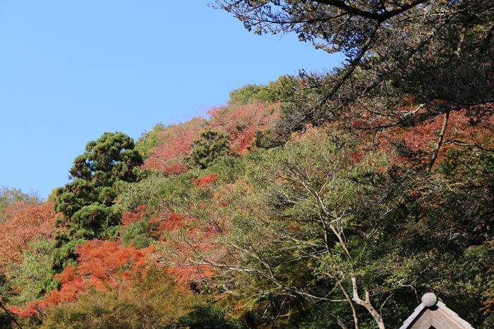 大阪・箕面市・箕面の滝20131120-1-12