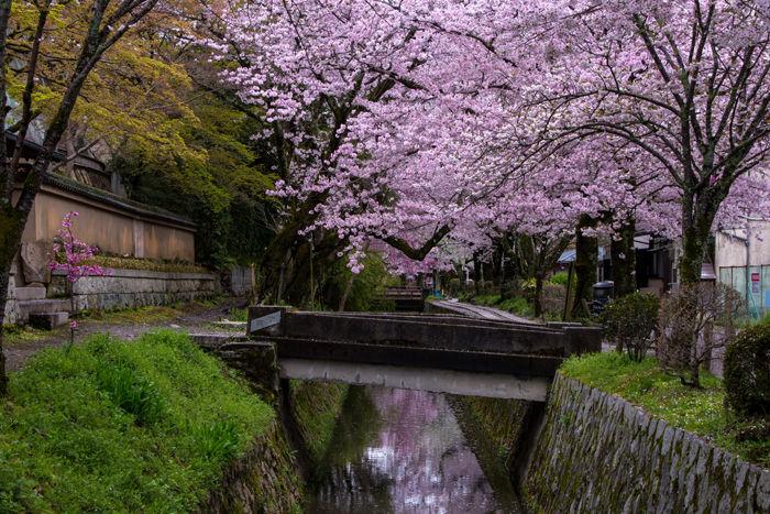 京都・左京区・哲学の道20170412-6