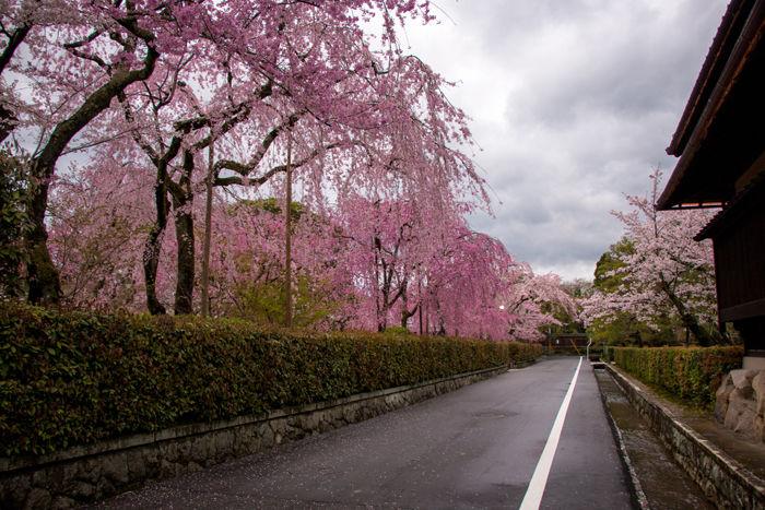 京都・左京区・南禅寺下河原町地区20170412-1