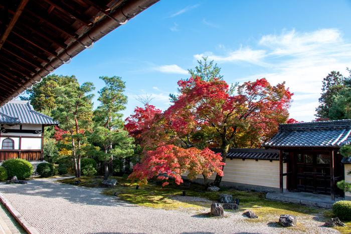 京都・北区・等持院20161116-2