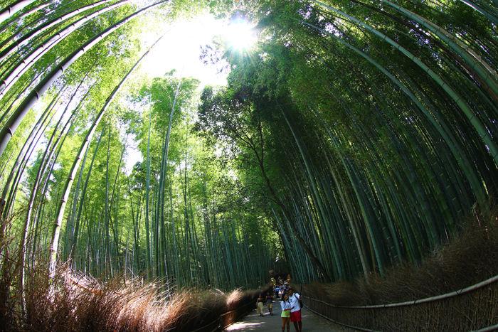 京都・右京区・【魚眼風景】嵐山竹林の道20150527-3