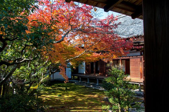 京都・右京区・仁和寺20161116-6