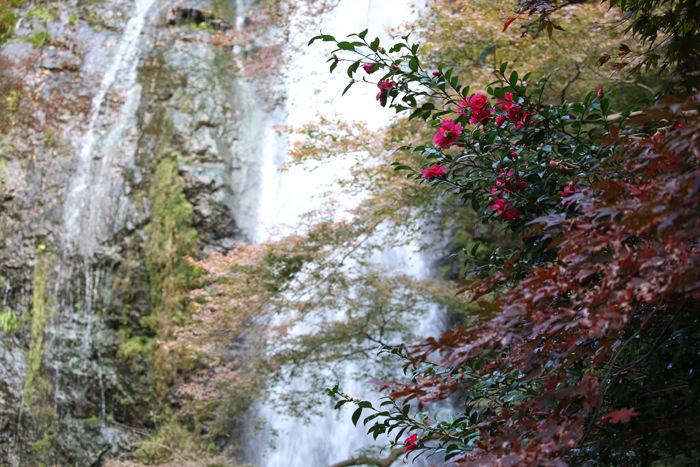 大阪・箕面市・箕面の滝20131120-2-2