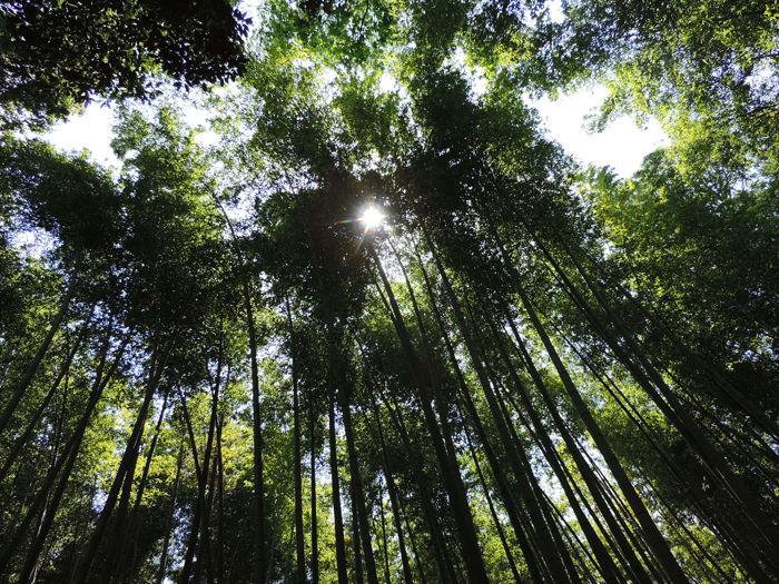 京都嵐山竹林の道7