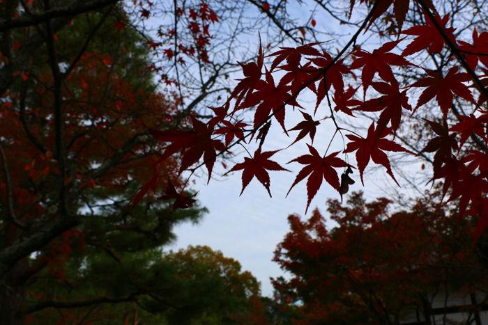 京都・北区・等持院20151121-5