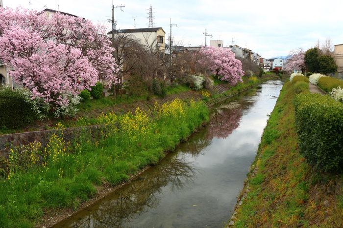 京都・右京区・坂本橋20160402-1